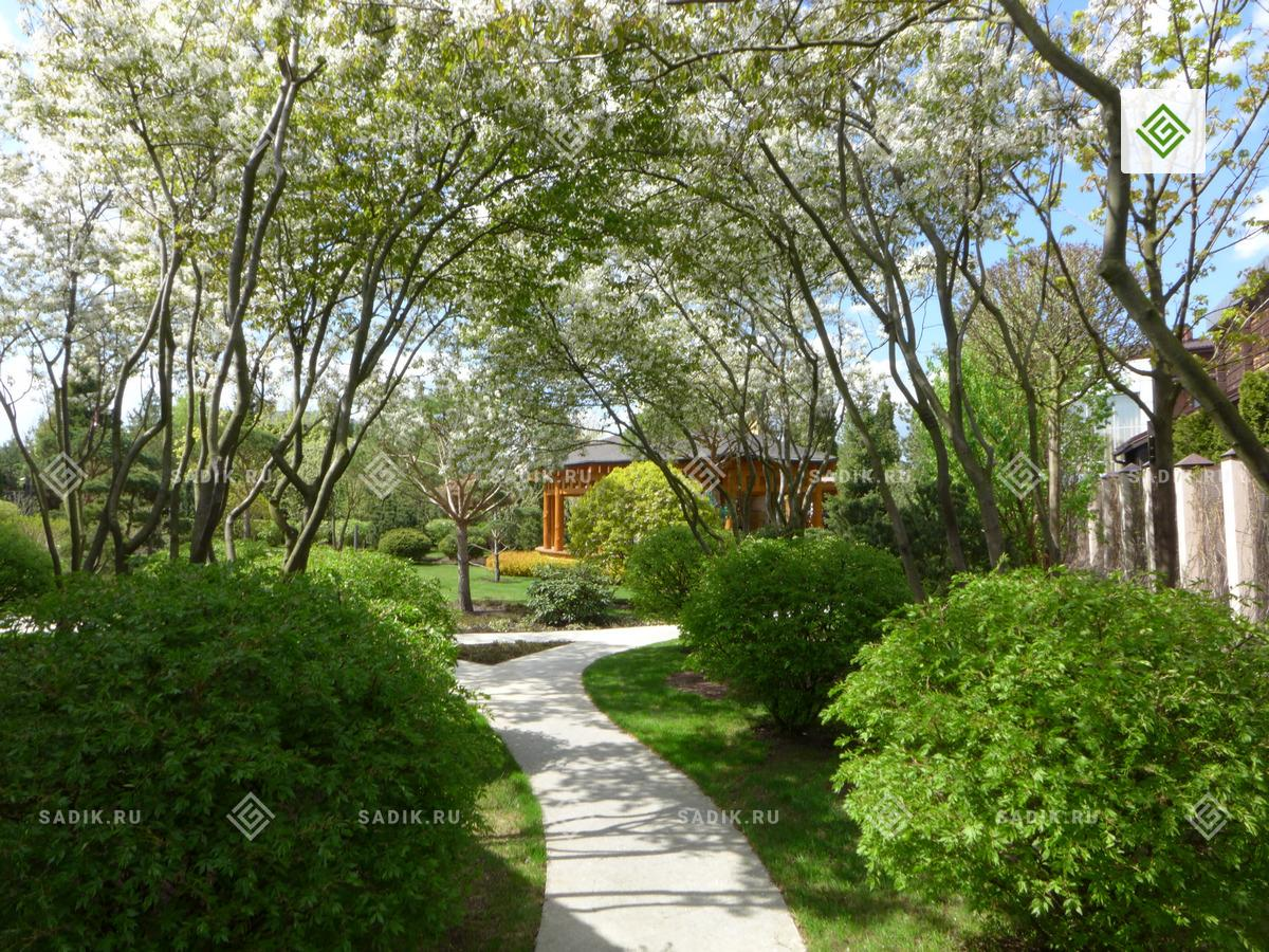Ландшафтный дизайн парка. Озеленение крупномерами